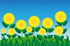 Słońce kwiat w łące Obraz Royalty Free