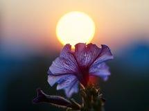 Słońce kwiatu romantyka Zdjęcia Stock