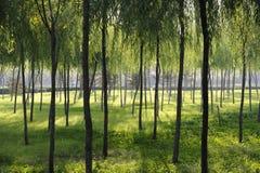 słońce las zdjęcia stock