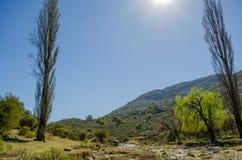 Słońce między drzewami Obraz Royalty Free