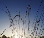 Słońce między trawą Obrazy Royalty Free