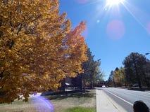 Słońce migocze na jesień dniu Zdjęcie Stock