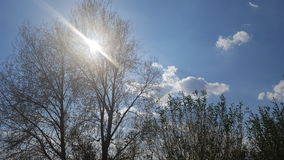 Słońce na dniu Obrazy Royalty Free