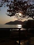 Słońce na drzewie Obraz Royalty Free