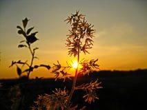 Słońce na gałąź Obraz Royalty Free