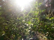 Słońce Na roślinie Zdjęcia Stock