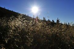 Słońce nad łąka Obraz Royalty Free