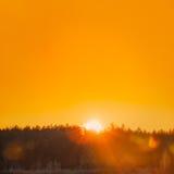 Słońce Nad horyzontów drewnami Lub las Z Pomarańczowym zmierzchu niebem naturalny Zdjęcie Royalty Free