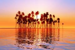 Słońce nad kokosowymi palmami Zdjęcia Royalty Free
