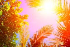 Słońce nad zielonymi palmowymi liśćmi samochodowej miasta pojęcia Dublin mapy mała podróż Tropikalny pojęcie tropikalny tło Fotografia Stock