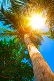 Słońce nad zielonymi palmowymi liśćmi samochodowej miasta pojęcia Dublin mapy mała podróż Tropikalny pojęcie tropikalny tło Zdjęcie Royalty Free