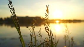 Słońce natury wschodu słońca roślina zbiory