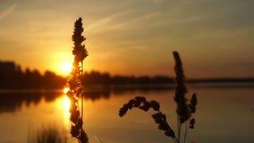 Słońce natury wschodu słońca roślina zdjęcie wideo
