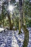 Słońce pęka przez drzew w zimie obrazy royalty free