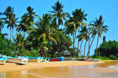Słońce palmy plaża w sri lance Zdjęcia Stock