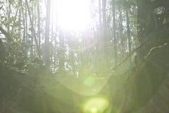 Słońce penetruje w drewnach fotografia stock
