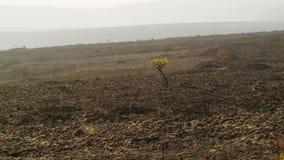Słońce piec trawy, ogieni zwrotów obszar trawiasty popiół, Ameryka Południowa zdjęcia royalty free