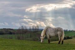 Słońce połysk promienieje w dół na koniu Zdjęcie Royalty Free