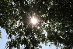 Słońce połysk przez drzewnych liści obrazy stock
