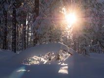 Słońce połysk w drewnach Obrazy Stock