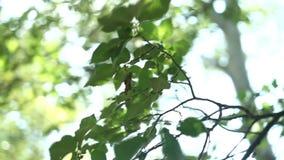 Słońce promieni światło błyszczy przez drzew i gałąź las Piękny tło egzotyczne flory zdjęcie wideo