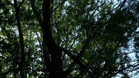 Słońce promieni światło błyszczy przez drzew i gałąź las Piękny tło egzotyczne flory zbiory