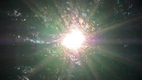 Słońce promieni światło błyszczy przez jabłoni i gałąź lasowy Piękny tło liście słońca i zieleni zbiory