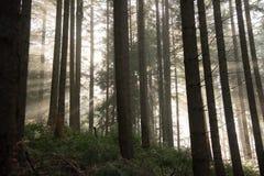 Słońce promieni przerwa przez mgły obraz stock