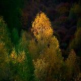 Słońce promienia kares drzewo zdjęcia royalty free