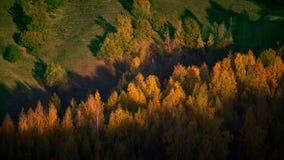 Słońce promienia kares wiązka drzewa obraz stock