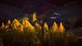 Słońce promienia kares wiązka drzewa zdjęcie stock
