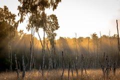 Słońce promienia sawanna Zdjęcie Stock