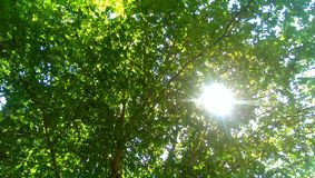 Słońce promienie Obrazy Royalty Free