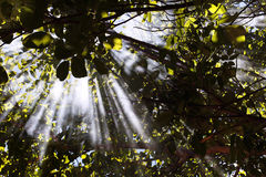 Słońce promienie Fotografia Royalty Free