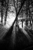 Słońce promienie i krzyżować drzewo sylwetki zdjęcia stock