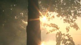 Słońce promienie krzyżują połysku i drzewa przez ulistnienia przeciw tłu rzeka zbiory wideo