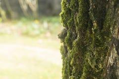 Słońce promienie na drzewnej barkentynie z mech Zdjęcia Stock
