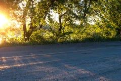 Słońce promienie na lasowej drodze Obraz Stock