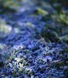 Słońce promienie na Mroźnej ranek trawie Zdjęcia Stock