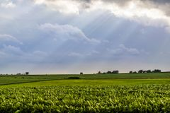 Słońce promienie nad środkowo-zachodni polem fotografia stock