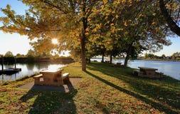 Słońce promienie przez żółtych liści Zdjęcie Royalty Free