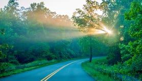 Słońce promienie przez drzew na drodze Zdjęcie Royalty Free