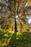 Słońce promienie przez drzew w jesieni obraz stock