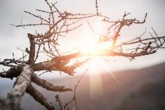 Słońce promienie przez gałąź drzewo Obraz Stock