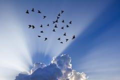 Słońce promienie przychodzący przez chmur fotografia stock