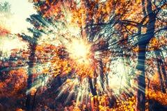 Słońce promienie w kolorze Zdjęcie Stock