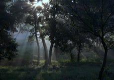 Słońce promienie w lesie Obrazy Royalty Free