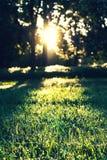 Słońce promienie w ranku w lesie Obrazy Stock