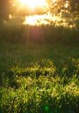 Słońce promienie w ranku w lesie Zdjęcia Royalty Free