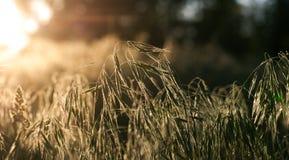 Słońce promienie w ranku w lesie Obrazy Royalty Free